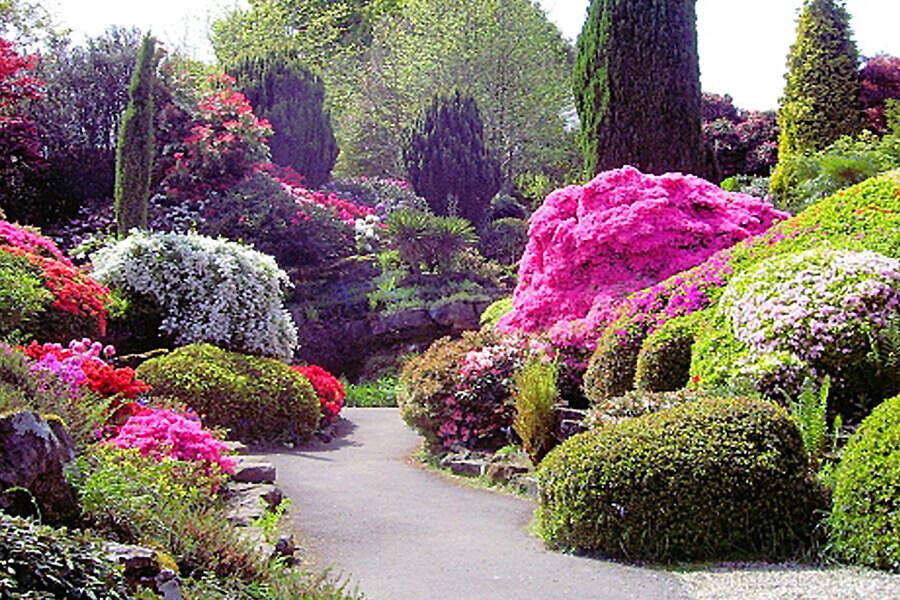 Курс по градински дизайн за начинаещи – базово ниво. Композиция на градината.