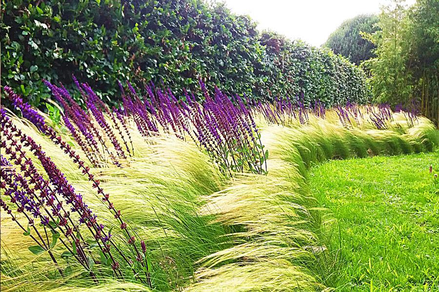 Поляната и нейните алтернативни варианти. Орнаменталните треви.