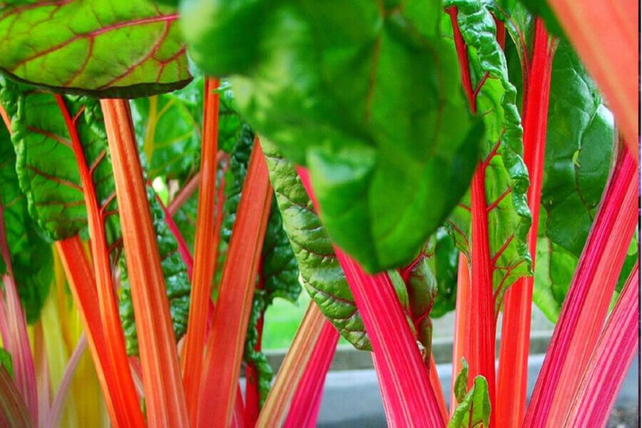 Аранжиране на зеленчуците.